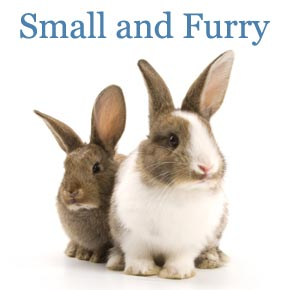 Small and Furry