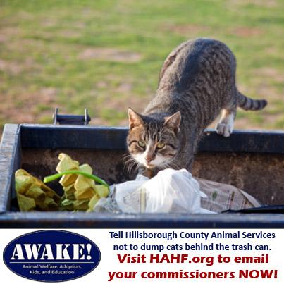 facebook cat in dumpster ad copy