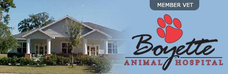 Boyette Animal Hospital