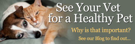 See Your Vet for a Healthy Pet